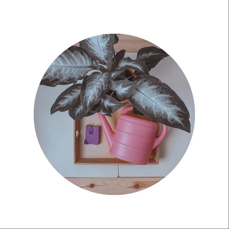 Actividad regamos plantas al estilo Montessori
